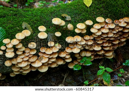 Old tree trunk moss wrapped with lots of fungus grows over - stock photo