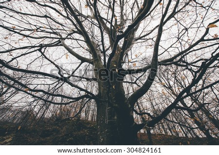 old tree twisted branches - stock photo