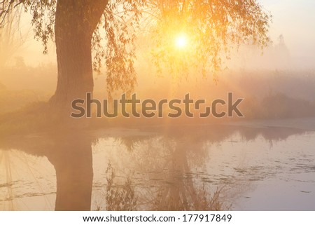 Old tree under the misty river - stock photo