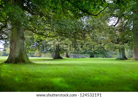 Old tree with mossy roots in an old grove forest of Beech and Oak. - stock photo