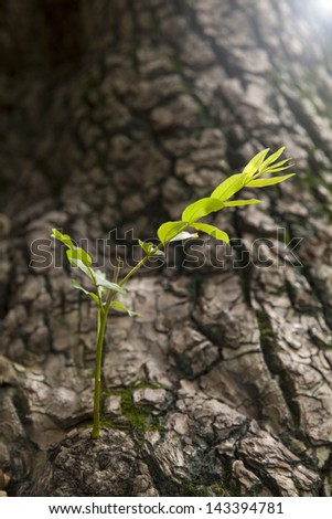 old tree with new germination, new life and hope - stock photo