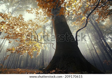 old tree with twisted roots in a misty forest in autumn - stock photo
