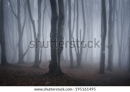 old trees in a foggy forest - stock photo