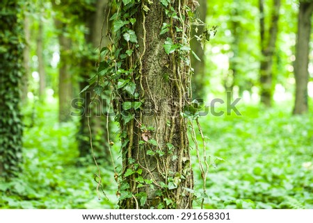 Old trees in beautiful green forest - stock photo