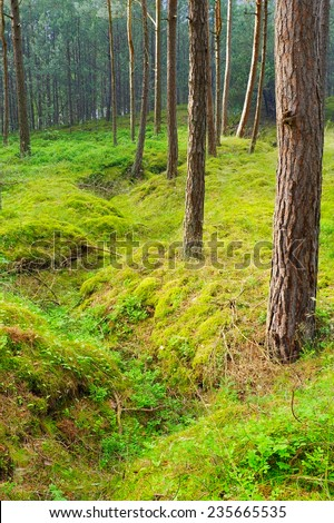 Old trench in the forest - the leftover of the World War II. Pomerania, northern Poland. - stock photo