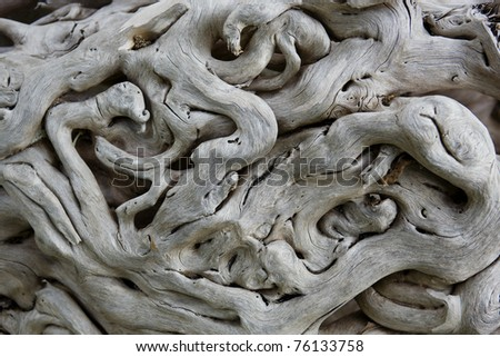 Old tropical tree bark. - stock photo