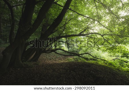 old twisted trees at the edge of forest - stock photo