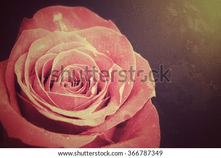 Old Vintage Grunge texture with pink rose - stock photo