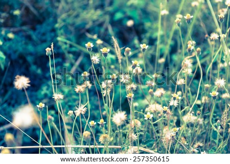 Old vintage meadow flowers on green grass background
