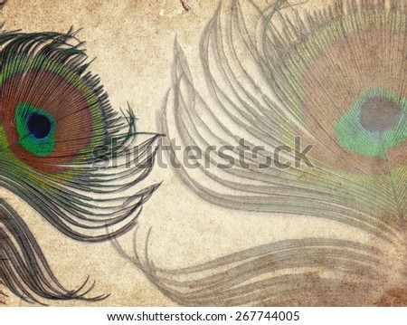 Old vintage paper texture background with peacock feather  - stock photo