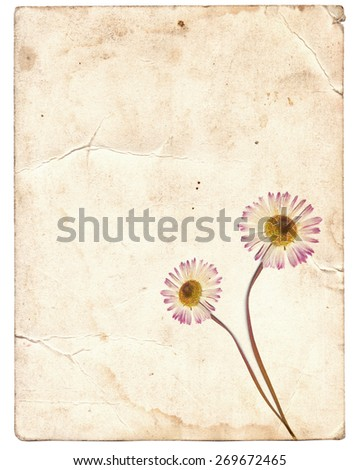 Old vintage paper texture with dry spring flowers