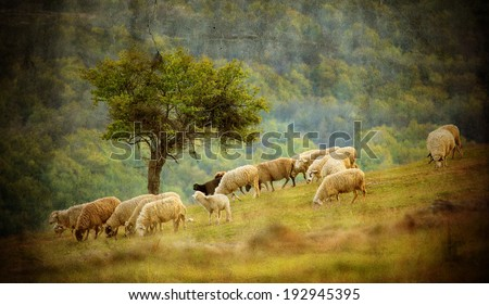 old vintage pastoral landscape with herd of sheep near bulgarian small village - stock photo