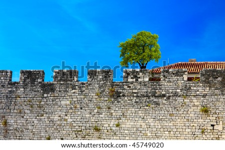 Old wall and green tree on a blue sky