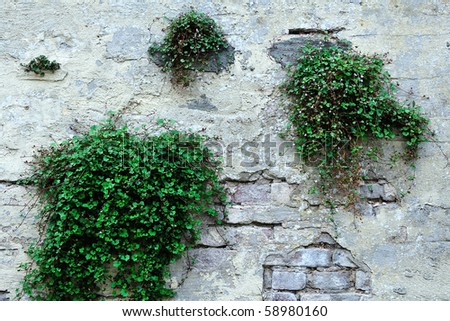 old wall and growing plants - stock photo