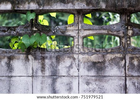 Old Wall Brick Block fence dirty background  cluttered trees.