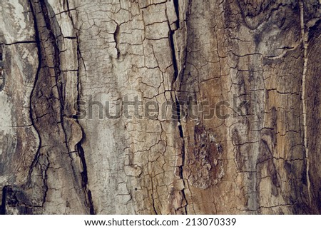 Old walnut tree trunk detail texture as natural background. - stock photo