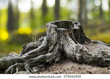 Old weathered tree stump with root in green summer landscape - stock photo