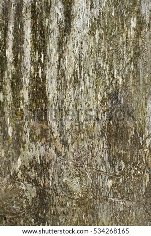 Old weathered wood texture close up.