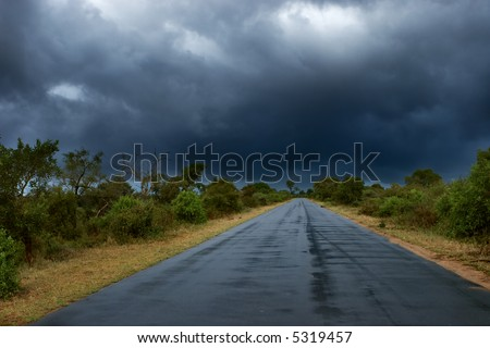 Old wet tar road in straight line between bushes; rainy weather - stock photo