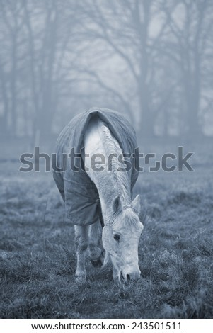 Old white horse grazing in a field on a misty winter day. Cyanotype effect added to emphasize cold weather - stock photo