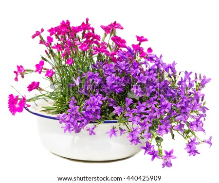 Old white washbowl with carnation and bellflowers with many blossoms, a rustic garden table decoration. - stock photo