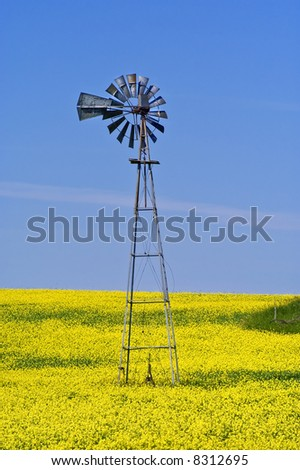 Old Windmill in Canola Field