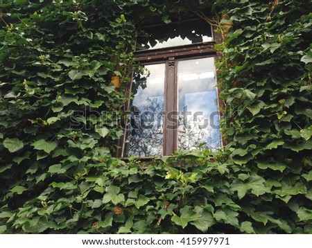 Old window with reflection of clouds on a wall with ivy