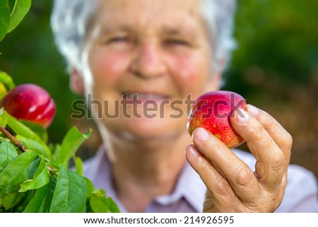 Old woman holding a peach in his hand in the orchard - stock photo