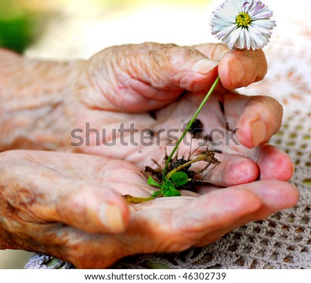 Old woman holding plant - stock photo
