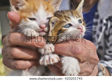 old woman holds her kittens - stock photo