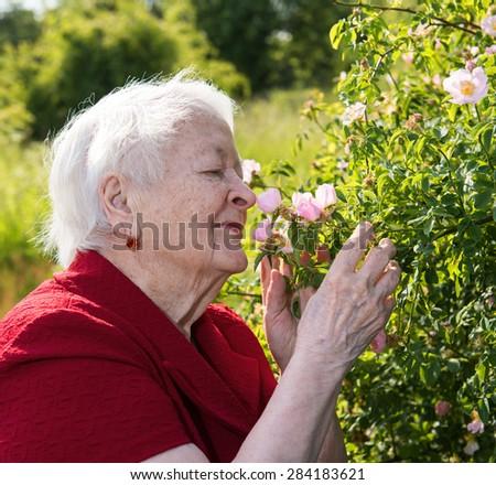 Old Woman smells Garden Roses. Springtime - stock photo