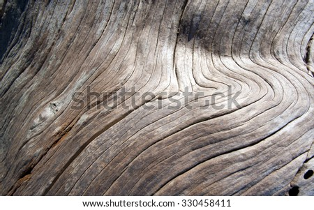 Old Wood, aged tree trunk - stock photo