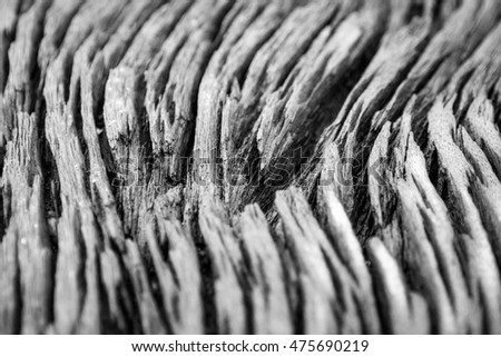 Old wood background and texture, Black and white vintage style.selective focus.