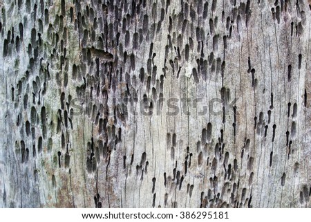 old wood background Surface roughness