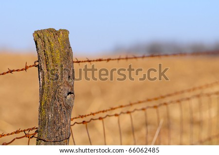 Old wood fence post with barb wire trailing off in a corn field - stock photo