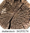 Old wood log cut texture - stock photo