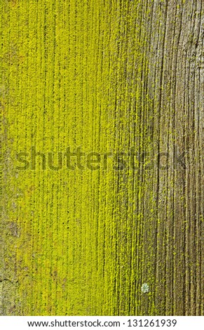 old wood texture and Lichen - stock photo