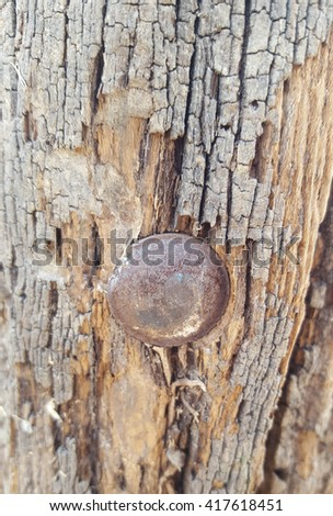 Old wood texture with screws