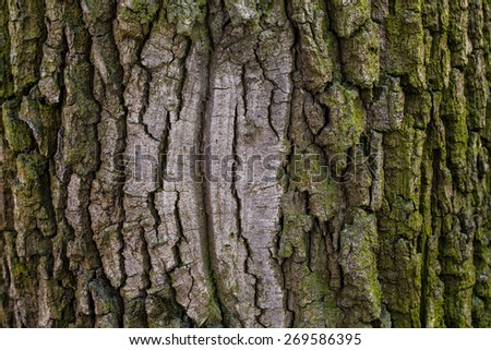 old wood tree bark texture with green moss - stock photo