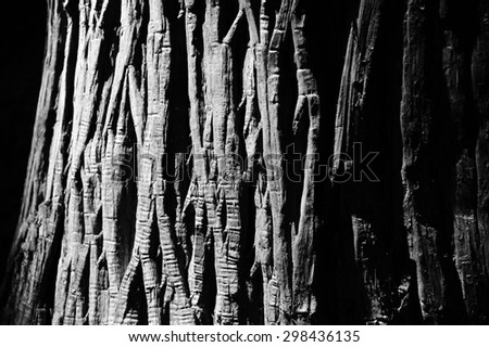 Old Wood Tree Texture Background with black and white - stock photo