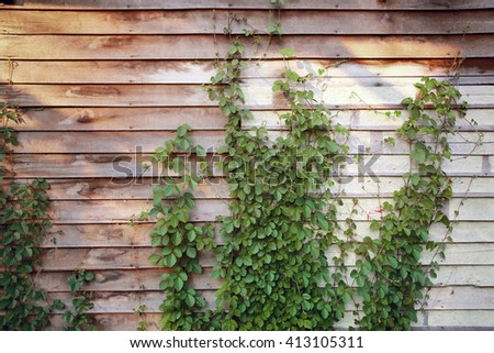 Old wood wall with dirty green weed,old abandoned house,color toned. - stock photo