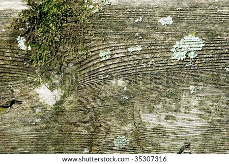 Old wood with moss for background - stock photo