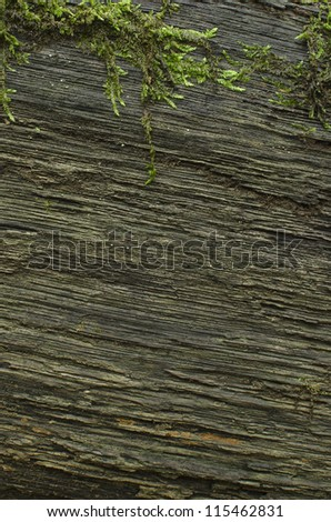 Old wooden background with moss. - stock photo