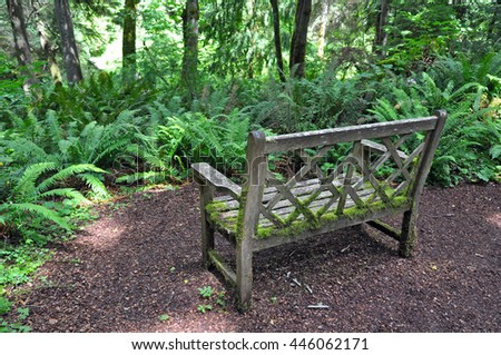 Old wooden bench covered in moss with forest in background