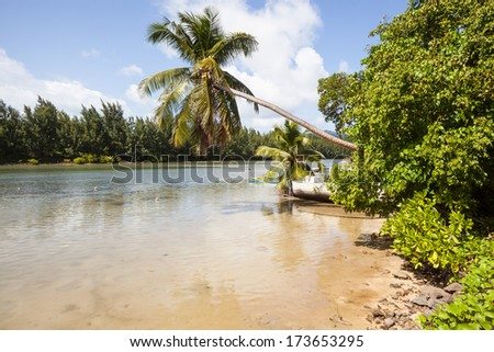 old wooden boat at the bank of a tropical river with coconut palm and exotoc trees, Praslin, Seychelles, Africa