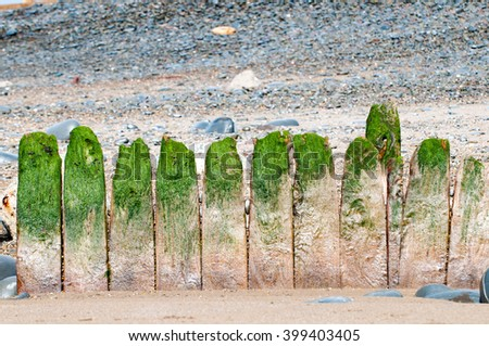 Old wooden breakwater with green seaweed on the top - stock photo