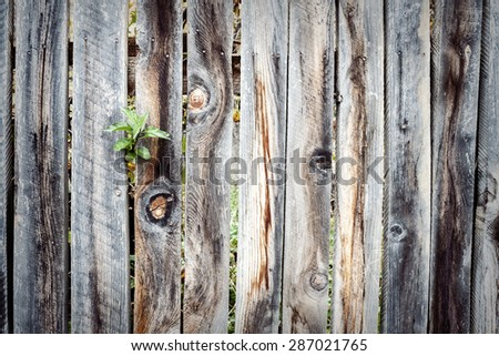 Old wooden fence with plant in home garden - stock photo