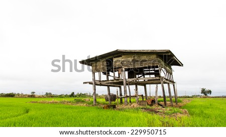 Old wooden housing decay can not be ignored in the rice fields. - stock photo