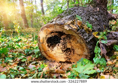 old wooden log in forest at nice sunny day - stock photo