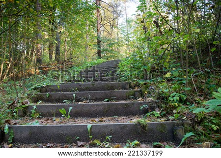 Old wooden staircase in the forest